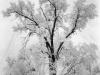 adams_snowstorm