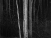 aspens-vertical-northern-new-mexico-1958