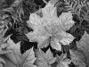 leaf-in-glacier-national-park