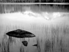rocks-and-grass-moraine-lake-1936