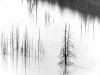 trees_ansel_adams